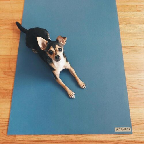 December 1: Limber up on this Jade Yoga Mat made from sustainable natural rubber (cute little buddy not included).